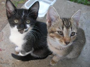 kitty energy